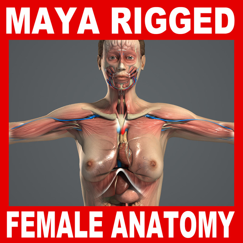 MAYA-Rigged-Female-Anatomy-Complete.jpg