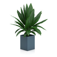 Plant in Square Blue Pot