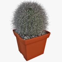 3d model cactus 2