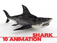 3d shark animate model
