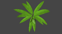 3d obj mangifera mango