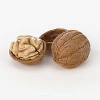 3d realistic walnut real model