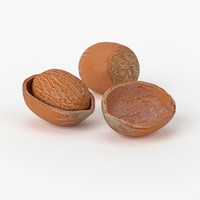 3d model realistic hazelnut real