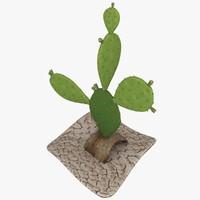 cactus opuntia max