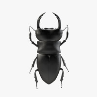 3d model of stag beetle