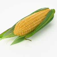 3d realistic corn real