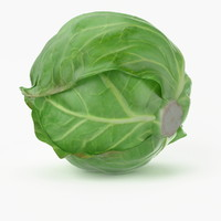 realistic cabbage real vegetables max