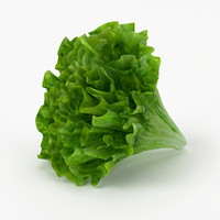 3d realistic lettuce real vegetables