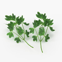 3d model realistic parsley real vegetables