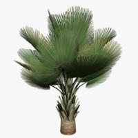 3ds max tree plant