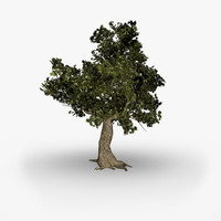 3d white oak tree model