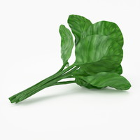 istic spinach 3d model