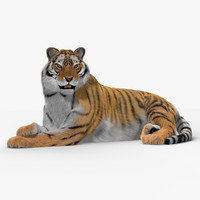 tiger cat fur animation 3d max