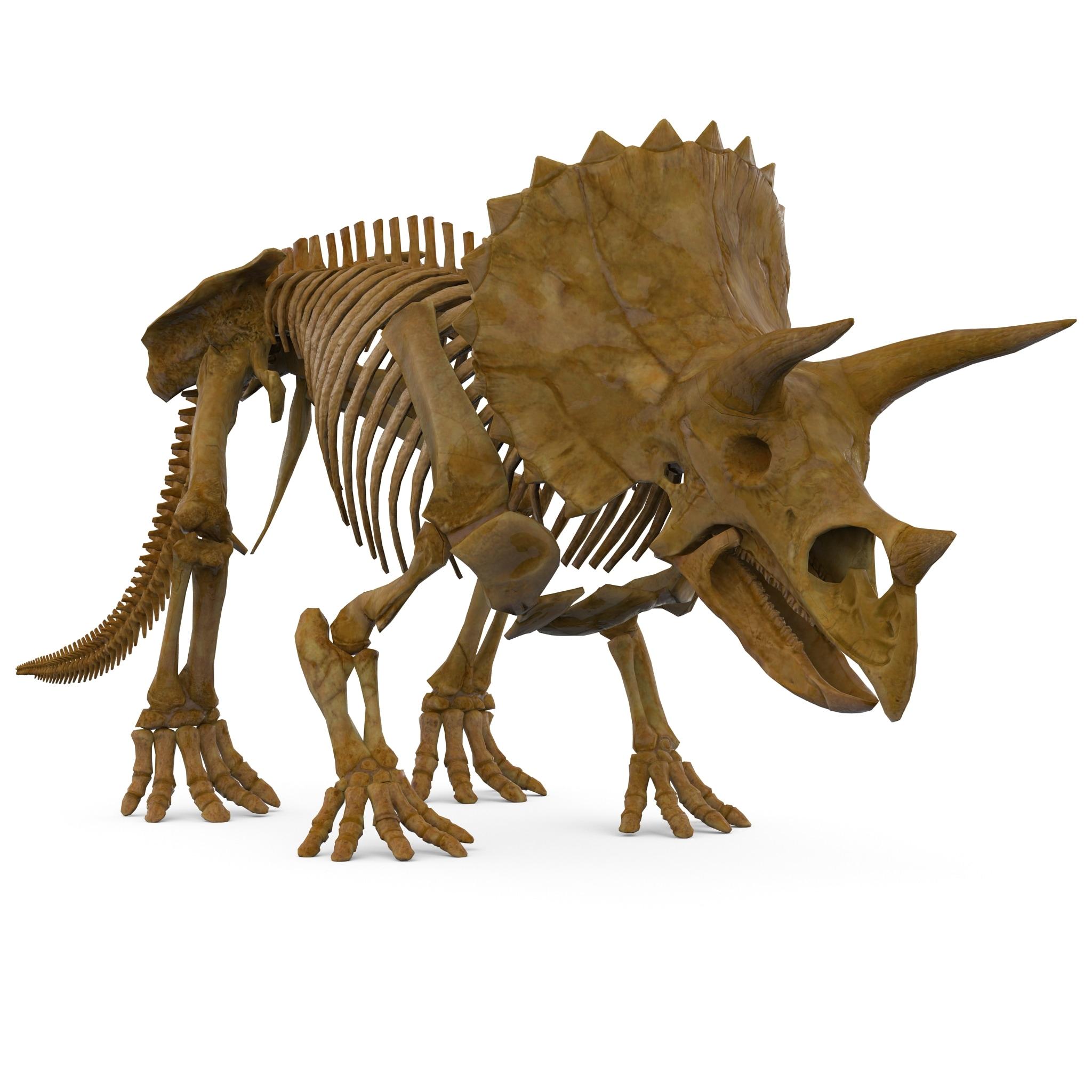Triceratops Skeleton Rigged_146.jpg