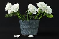 rose white 3d max