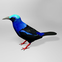 3d honeycreeper
