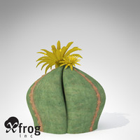 bishop cap cactus plant 3d model