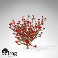 3dsmax xfrogplants staghorn cholla plant