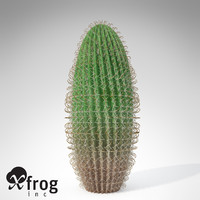 XfrogPlants Arizona Barrel Cactus