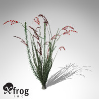 ocotillo plant 3d model