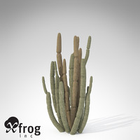 organ pipe cactus plant 3d model