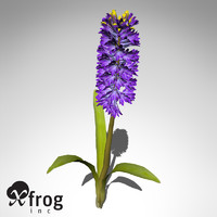 xfrogplants hyacinth plant flowers 3ds