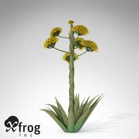 desert agave plant 3d model