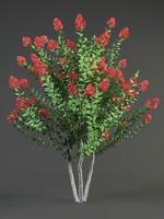 lagerstroemia bush max