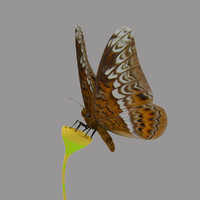 ma tiger butterfly animation