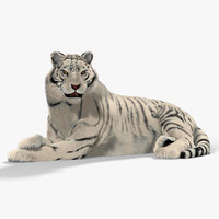 3d model of white tiger cat fur