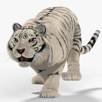 white tiger cat fur 3d max