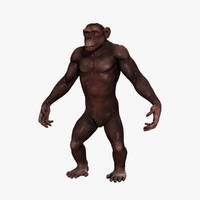 3d model chimpanzee chimp