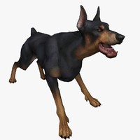 3d doberman pinscher model