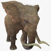 3d elephant animal rigged model