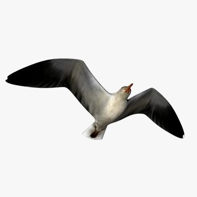 seagull06.jpg