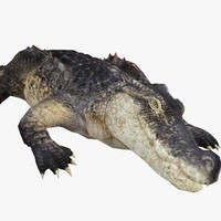 3d alligator realistic animal