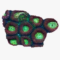 maya favia coral
