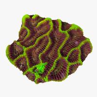 platygyra coral 3d model