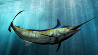 fish black finned marlin 3d obj