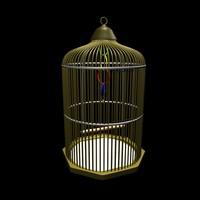 bird cage ma