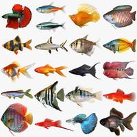 3d model mega freshwater fish