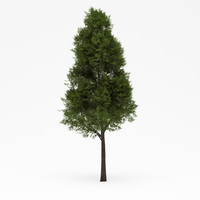 3ds max deciduous 04
