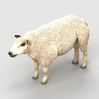 lamb sheep max
