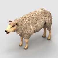 lamb sheep 3d x