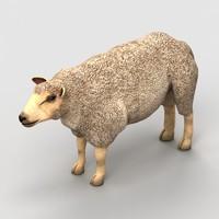 lamb sheep 3d x