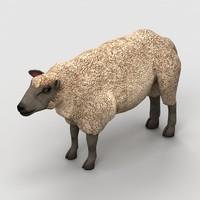 3d model lamb sheep