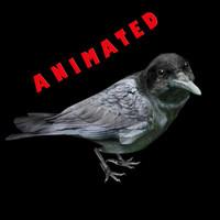 3d crow animal model