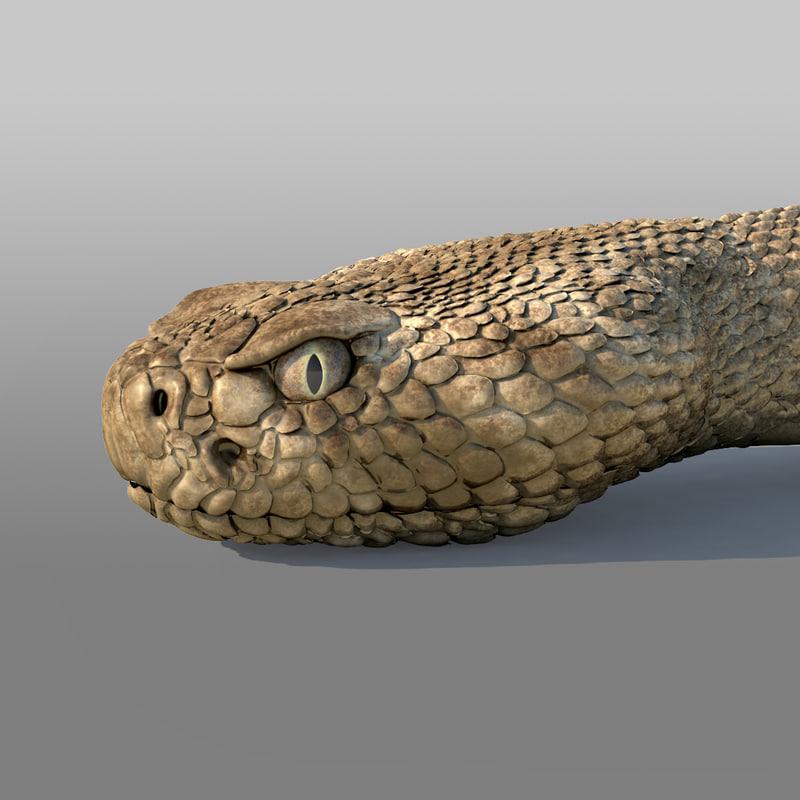 Rattlesnake_01.jpg