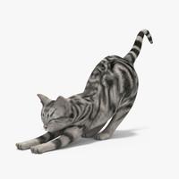 3dsmax cat
