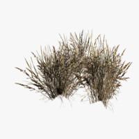 free grass dry 3d model
